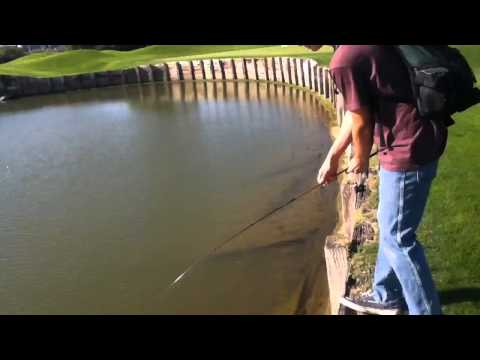 Texas Golf Course Bass Fishing