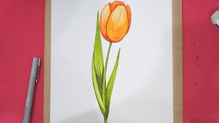 How To Draw Tulip Flower Step By Step In 8 Minutes
