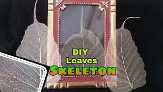DIY Skeleton Leaves At Home - How To Make Leaf Skeleton - Making Leaf Skeleton