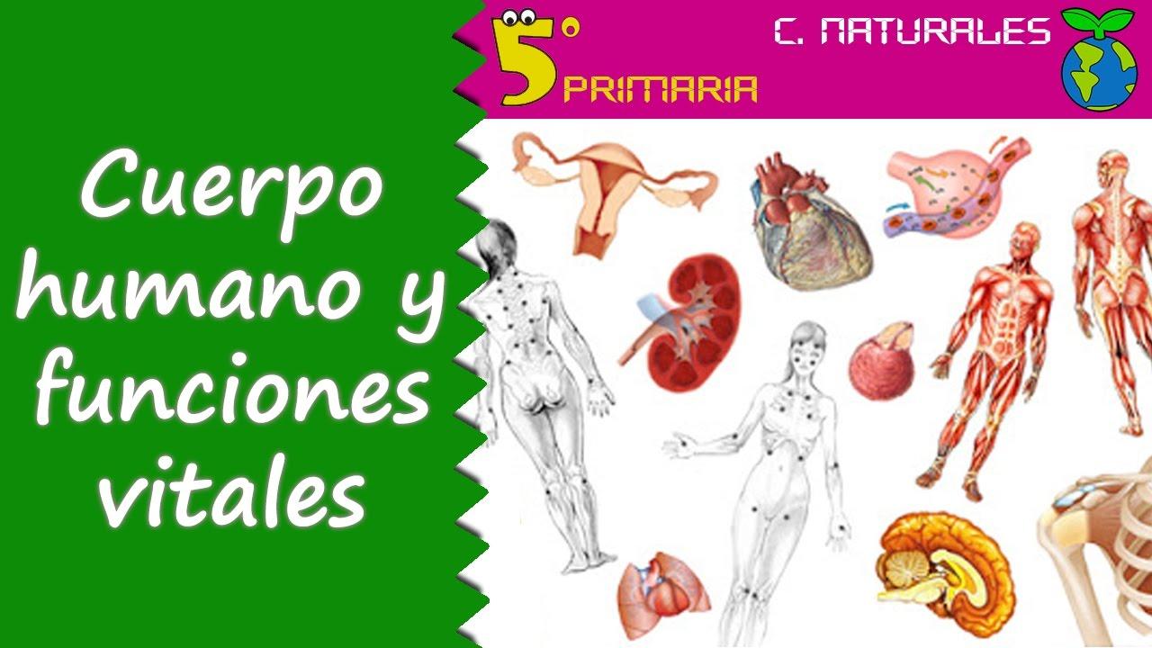 Cuerpo humano y funciones vitales. Naturales, 5º Primaria. Tema 4