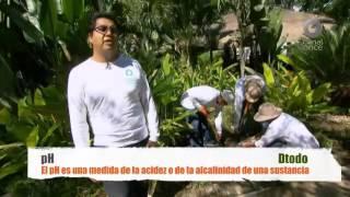 D Todo - Paseando en los jardines de Morelos I
