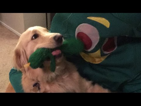 Guy dresses up as dog's favorite toy
