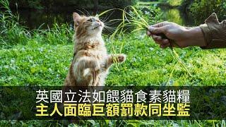思浩話你知英國主人如果淨係餵貓食素貓糧,貓會死快啲主人仲會面臨巨額罰款同坐監!(大家真風騷)