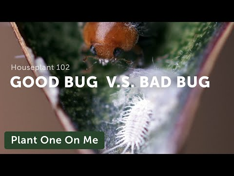 Houseplant Pest Guide - How to Identify & Fight Them
