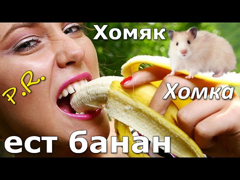 Хомяк ест банан!