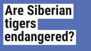 Are Siberian tigers endangered?