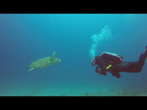 Scuba Diving at Phil Foster Park Blue Herron Bridge