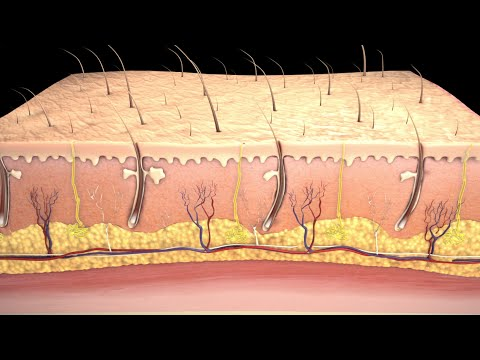 Przeszczep skóry