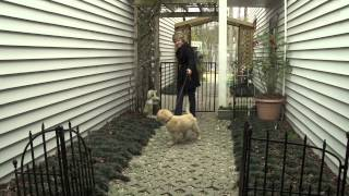 A Guide To Dog Care And Training - American Kennel Club