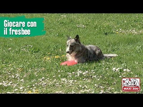 TUTORIAL: Giocare con il frisbee | Maxi Zoo