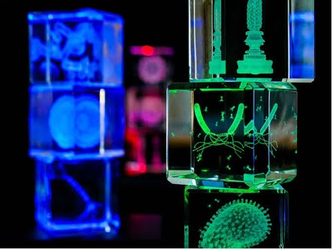 The Microcosm in Glass: Viruses, Bacteria, and Cells-GadgetAny