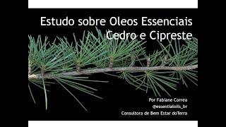 Conheça os óleos de Cedro e Cipreste