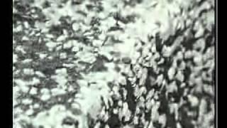 Video Architektura ostrých hran