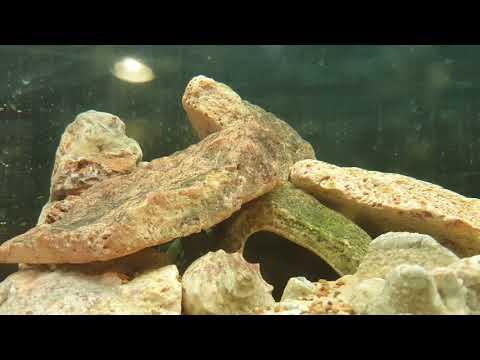 Hogyan lehet megszabadulni a parazitáktól szubkután