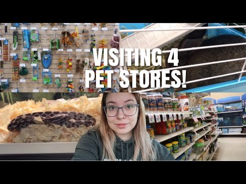 Visiting 4 Different Pet Stores In One Day! | Pet Store Vlog