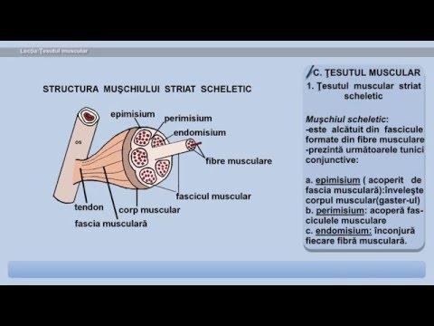 Remedii pentru artrita articulației șoldului