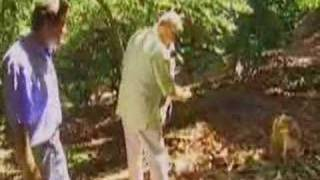Huell Howser Avacado Eating Dog