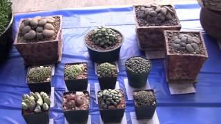Barry Landau's Tropical Planet - San Diego Winter Cactus Show 2015
