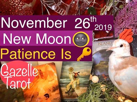 November 26 2019 Daily Tarot Reading 🌚✨Being Patient & Self love 🦢💕 #tarot #daily #tarotreader
