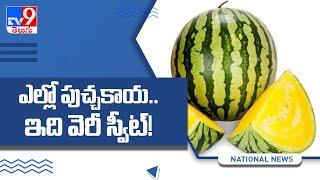 Yellow Watermelons : ఇవి ఎక్కడ దొరుకుతాయో తెలుసా..! - TV9