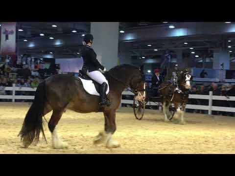 Pferd & Jagd 1. Tag