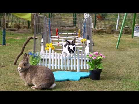 Unser Freigehege / Auslauf / Gehege für unsere Kaninchen