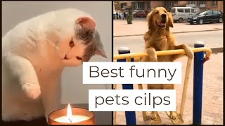 Funniest Dogs and cat Awesome Funny Animals vines