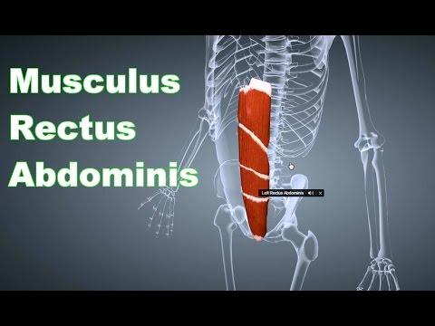 Kragen von degenerativen Bandscheibenerkrankungen der Halswirbelsäule