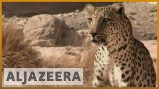 Witness - Saving the Leopard