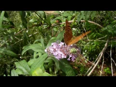 КРАСОТА! Крымские бабочки. Релакс. Amazing butterfly. Relax.