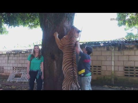 Así Es La Vida Con 7 Tigres En Casa