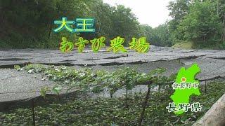 大王わさび農場 長野県安曇野 水とアイスの絶妙のコンビ