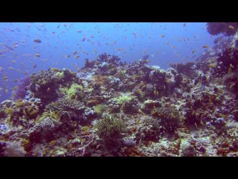 Barracuda Giri (Okobe Thila), Barrakuda Giri,Nord Male Atoll,Malediven