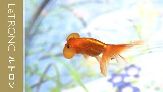 4500匹の金魚の世界!時之栖「水中楽園AQUARIUM」