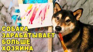 Собака рисует шедевры на холсте, в которые трудно поверить!