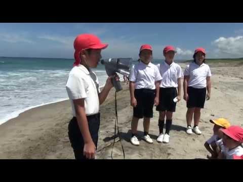 種子島の学校活動:岩岡小学校長浜海岸でウミガメ放流体験2015年