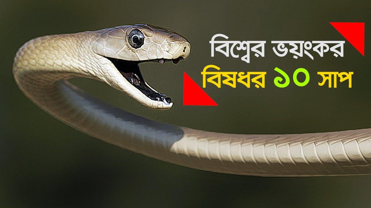 বিশ্বের সবচেয়ে ভয়ংকর বিষধর ১০ সাপ || The 10 most dangerous venomous snakes in the world