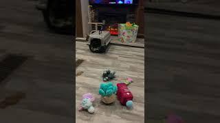 Miniature Dachshund Puppies Videos