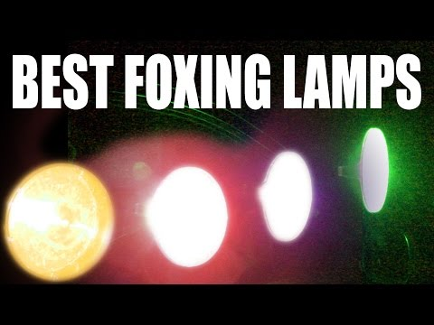 Best Foxshooting Lamps