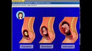 Extramarks design video for easy to understand How do Organism Reproduce