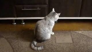 Приколы с котами № 15. Смешные коты. Приколы 2018.  Канал улыбок