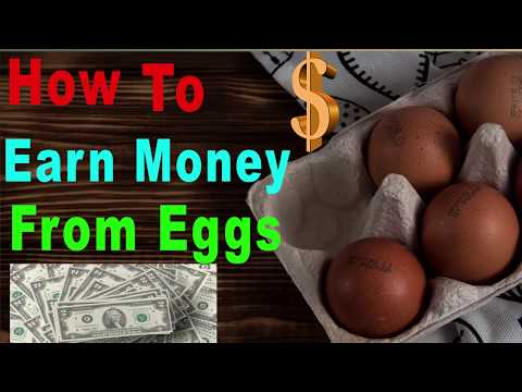How to Earn Money From Eggs| Poultry Farm Business ideas in Urdu/Hindi--Earn Money Up to 50 Thousand