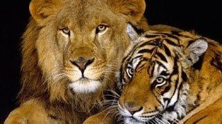 20 животных которые смогут вас убить без труда