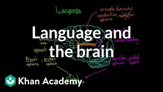 Language and the brain: Aphasia and split-brain patients | MCAT | Khan Academy