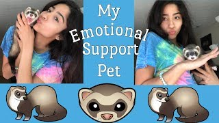 Getting My Emotional Support Ferret! VLOG// HAUL// CAGE TOUR/SETUP