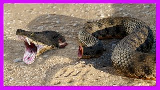10 Craziest Animals That Can Live On After Death! by Epic Wildlife