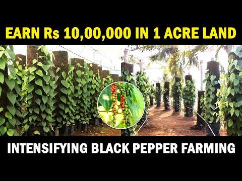 , title : 'Intensifying Black Pepper Farming | Vertical Column Black Pepper Cultivation