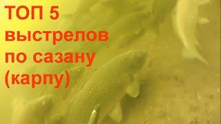 ТОП 5 ВЫСТРЕЛОВ ПО САЗАНУ,карпу.Подводная охота на реке Днепр.
