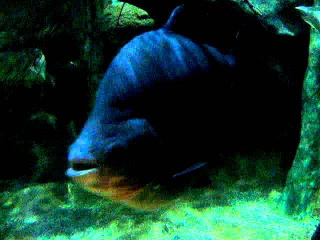 The Tropical Fish of Ocean Park  #2