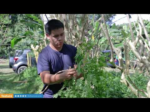 Mori Farms owner aims to market Moringa to younger generation.